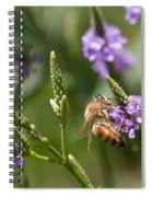 Bee On Purple Loosestrife  Spiral Notebook