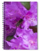Bee On Rhododendrons Spiral Notebook