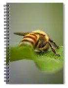 Bee Still Spiral Notebook