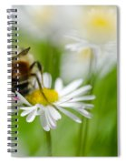 Bee The Daisy Spiral Notebook