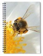 Bee-u-tiful Squared Spiral Notebook