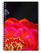 Bee Uti Full Spiral Notebook