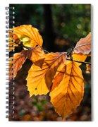 Beech Leaves In Winter Spiral Notebook