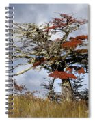 Beech Tree, Chile Spiral Notebook