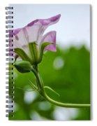 Beeline To The Light Spiral Notebook