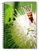 Beetle On Buttonbush Spiral Notebook