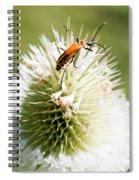 Beetle On White Spiky Wild Flower Spiral Notebook