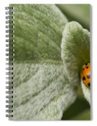 Beetle Pad Spiral Notebook