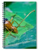 Beetle Sneeking Around Spiral Notebook
