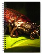 Beetle With Powerful Mandibles Spiral Notebook