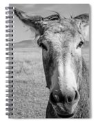 Begging Burro Spiral Notebook