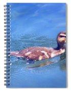 Beginner...   # Spiral Notebook