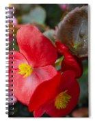 Begonia 20140706-1 Spiral Notebook