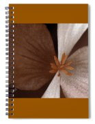Begonia Spiral Notebook