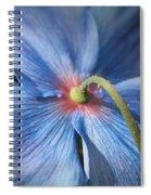 Behind The Blue Poppy Spiral Notebook