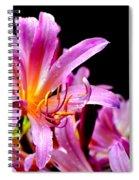 Belladonna Lilies Spiral Notebook