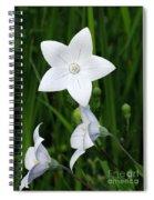 Bellflower - Campanula Carpatica Spiral Notebook