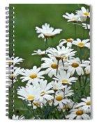 Bellis Perennis Spiral Notebook