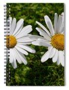 Bellis Perrenis Spiral Notebook