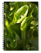 Bells Of Ireland Plant Spiral Notebook