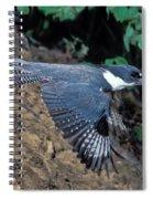 Belted Kingfisher Leaving Nest Spiral Notebook