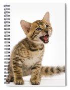 Bengal Kitten Spiral Notebook