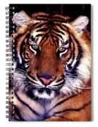 Bengal Tiger Eye To Eye Spiral Notebook