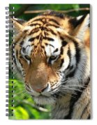 Bengal Tiger Portrait Spiral Notebook