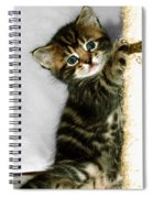 Benny The Kitten Playing Spiral Notebook