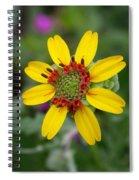 Berlandiera Lyrata Spiral Notebook
