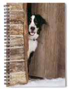 Bernese Mountain Dog At Log Cabin Door Spiral Notebook