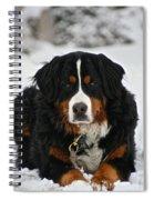 Bernese Mountain Dog Spiral Notebook