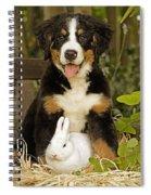 Bernese Mountain Puppy And Rabbit Spiral Notebook