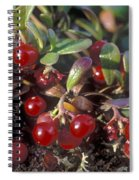 Berries Spiral Notebook