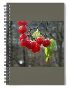 Berries In Winter Spiral Notebook
