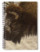Beware Of The Bison Spiral Notebook