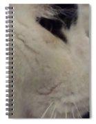 Bianconero Spiral Notebook