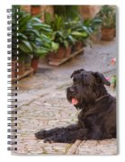 Big Black Schnauzer Dog In Italy Spiral Notebook