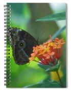 Big Boy Butterfly Spiral Notebook