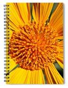 Big Bright Bold Spiral Notebook