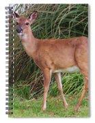 Big Brown Eyes Spiral Notebook