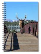 Big Bull On The Bridge Spiral Notebook