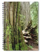 Big California Redwood Tree Forest Art Prints Spiral Notebook