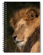 Big Cat Nap Spiral Notebook