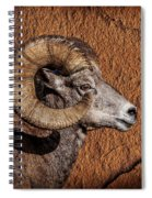 Big Horn Spiral Notebook