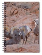 Big Horn Group Pose Spiral Notebook