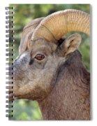 Big Horn Spiral Notebook