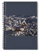 Big Horn Sheep Close Up Spiral Notebook
