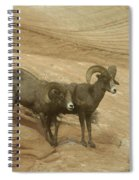 Big Horn Sheep Spiral Notebook