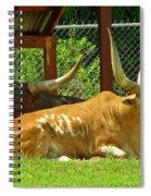 Big Horns Spiral Notebook